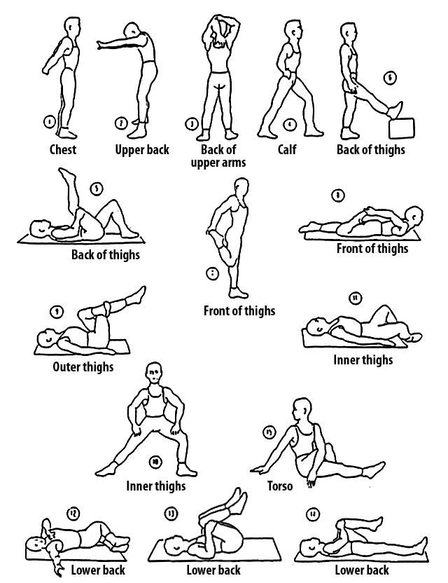 basicexerciseseries stretchexercise